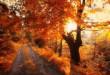 پاییز 1