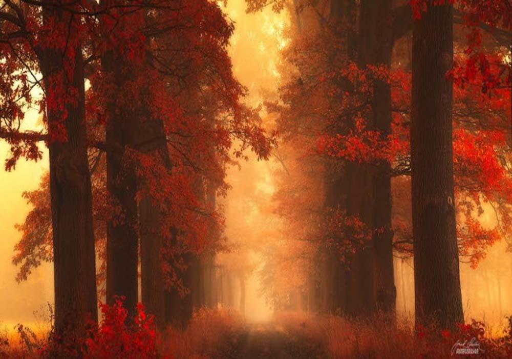 پاییز2