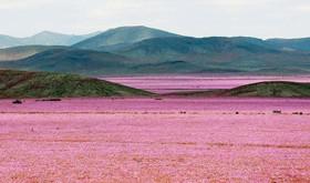 صحرا 2