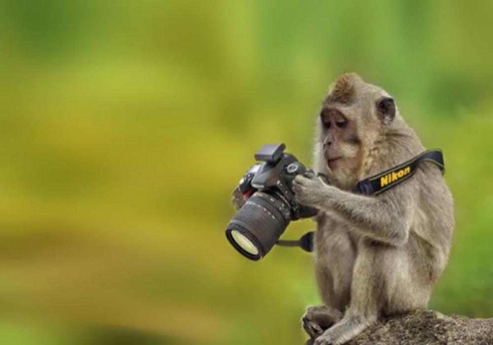 عکاس2ی