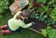 باغ باغ