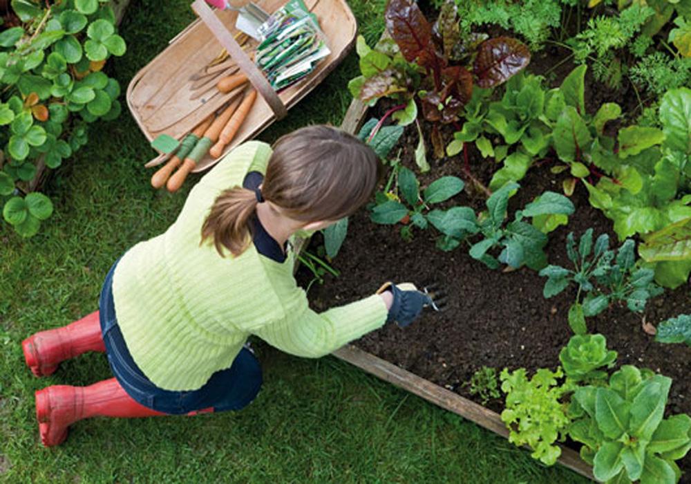 باغ3 باغ
