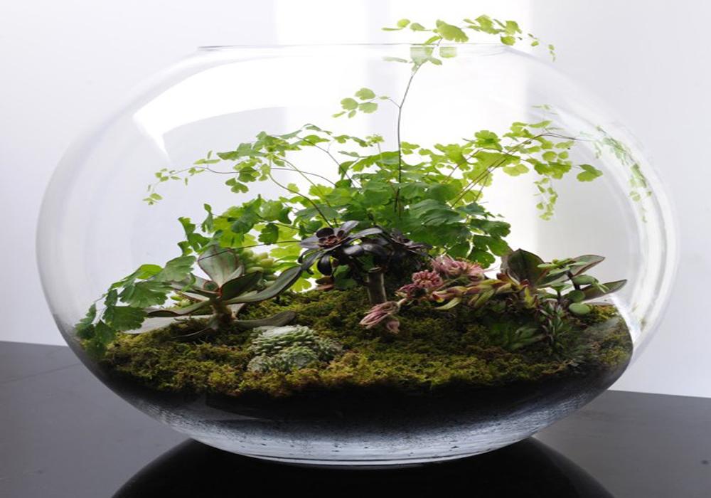 پرورش گل تراریوم در منزل - PERSIANS IN LAتراریو م2. تراریوم چیست ؟