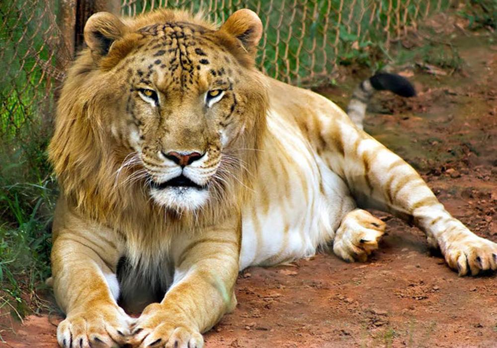 جانور 2