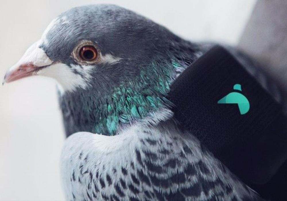 کبوتر2222